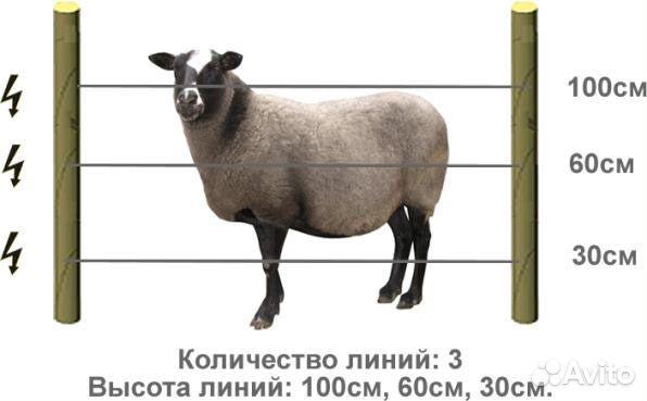 Электропастух своими руками для коз