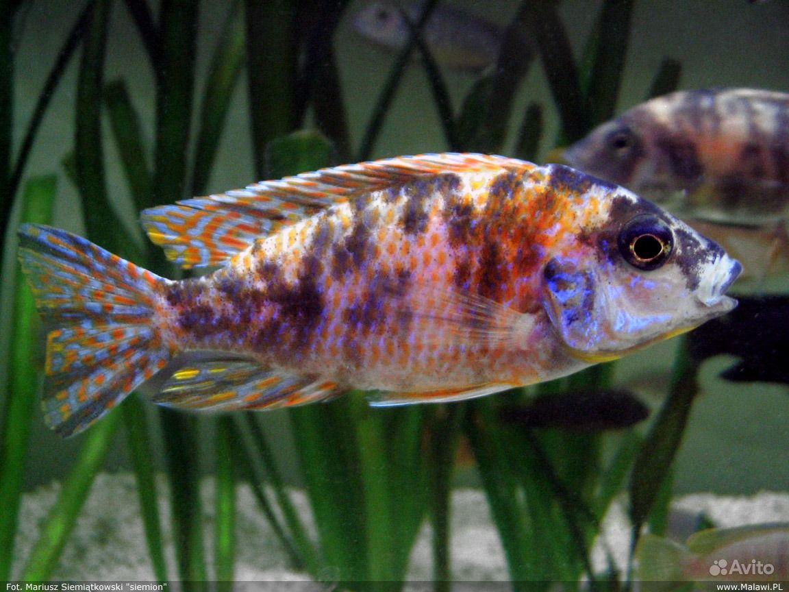Ведущий аквариумный интернетмагазин в России AQUASHOPru