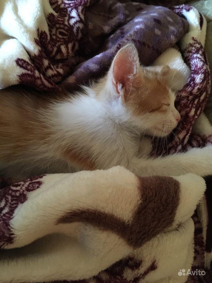 Спасите котёнка в Краснодаре - фотография № 3