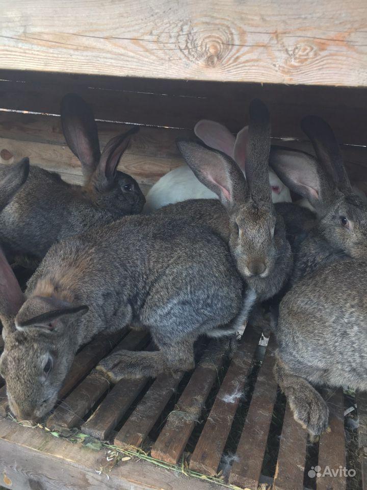 Кролик в Биробиджане - фотография № 6