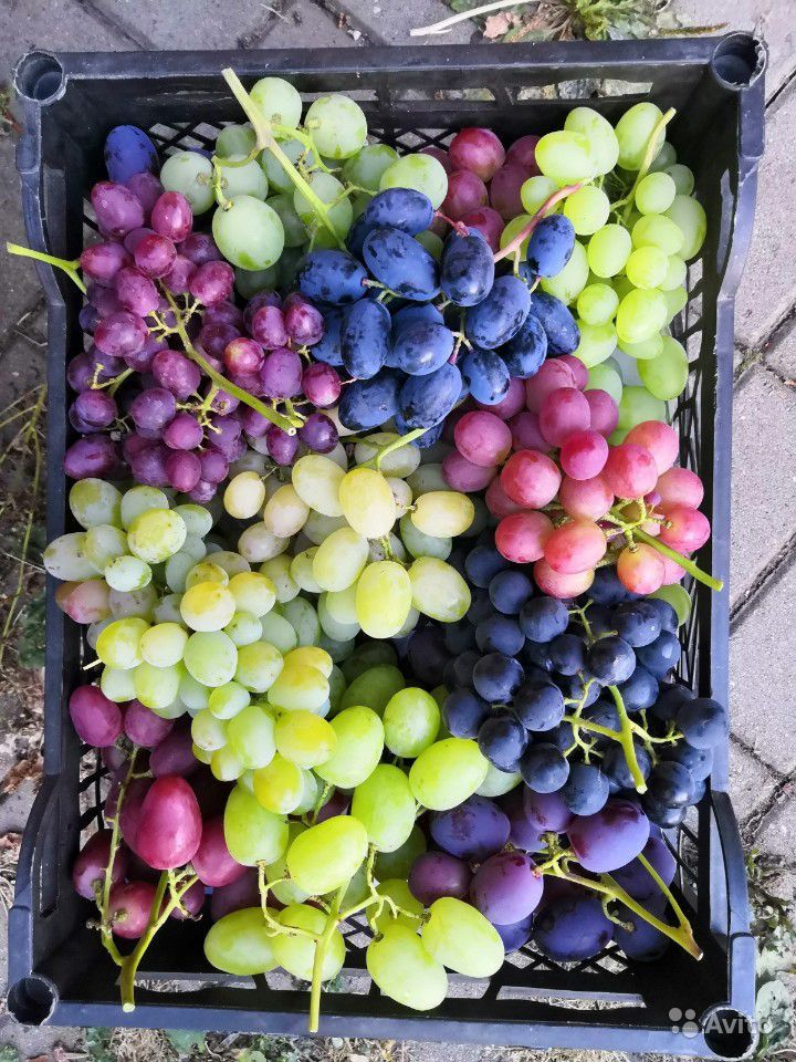 Саженцы винограда купить на Зозу.ру - фотография № 2