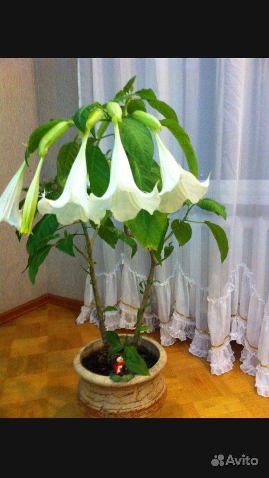 Цветок купить на Зозу.ру - фотография № 1