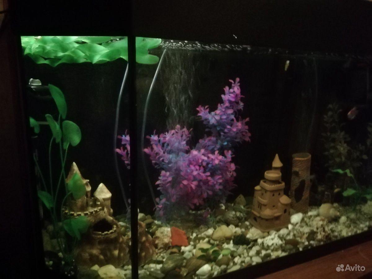 Аквариум с рыбами купить на Зозу.ру - фотография № 2