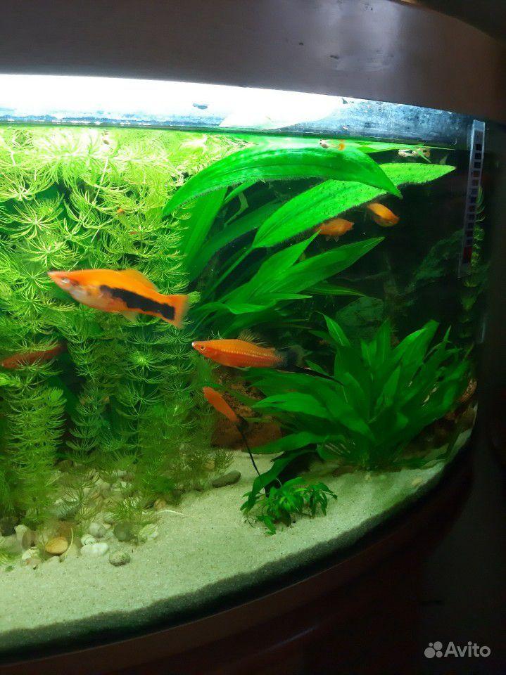 Аквариум с рыбками и тумбой купить на Зозу.ру - фотография № 3