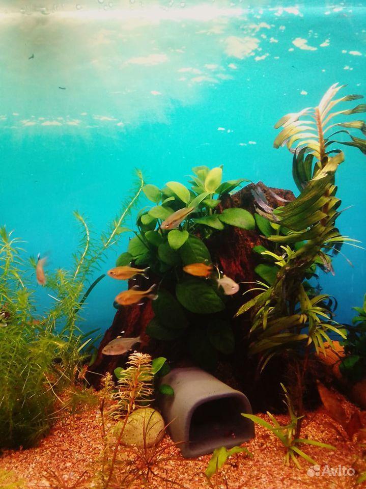 3 аквариума купить на Зозу.ру - фотография № 6