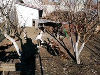 Индоутка — Другие животные в Орлово