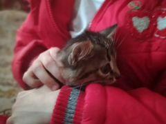 Отдам котёнка в добрые руки 1 месяц, к лотку приуч