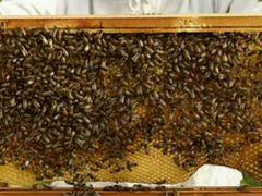 Продукты мёдовые