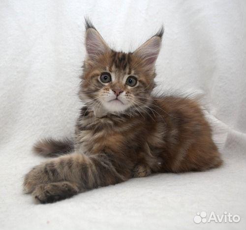 Котята для вас