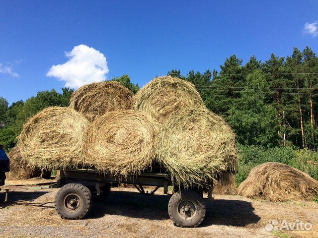 хлопка продажа сена в старобачаты Woolpower используется условиях