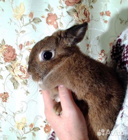 договор купли продажи кроликов
