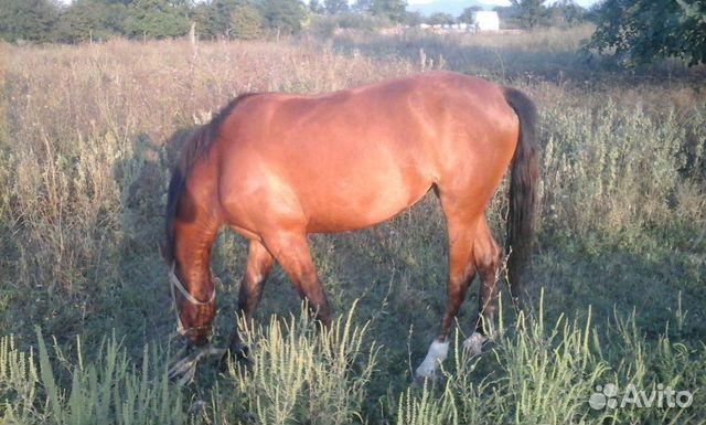 Лошадь 89298881205 купить 1