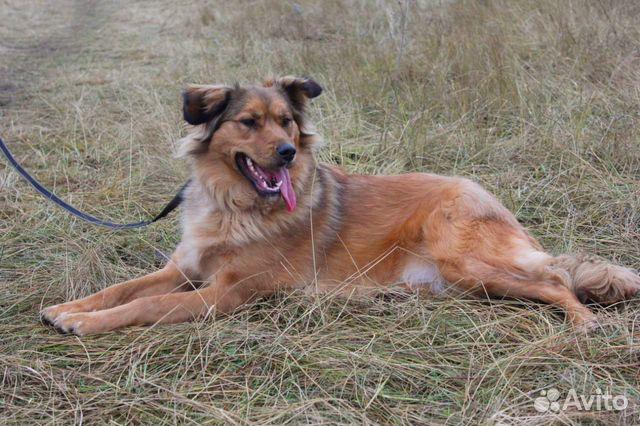 Собака в добрые руки купить на Зозу.ру - фотография № 1