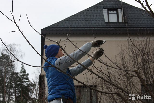 Садовник. Обрезка, обработка, посадка, прививка деревьев и ... | 426x640