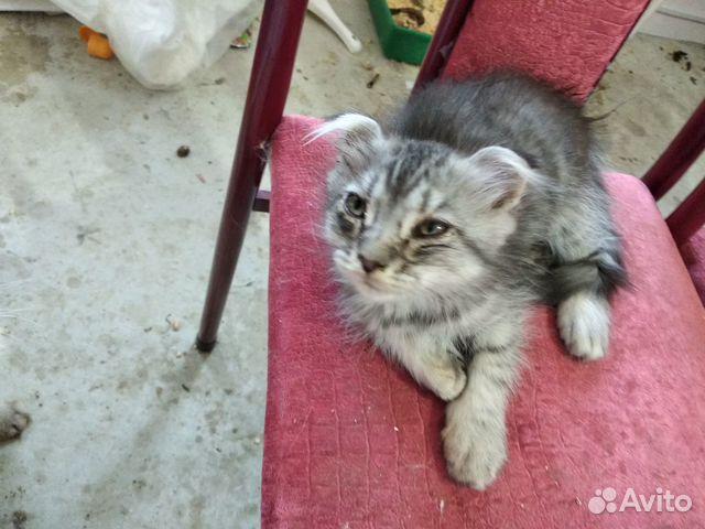 Котята даром 89197391040 купить 3