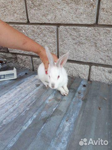 Кролик  89277704326 купить 4