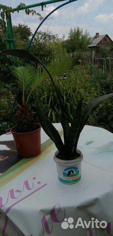 Комнатные растения  89512560859 купить 4