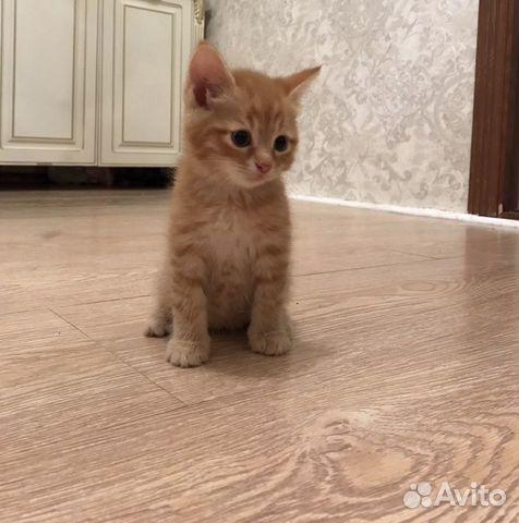 Котенок  89640694218 купить 3