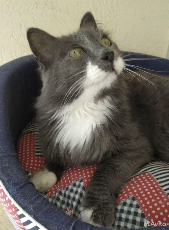 Алиса, Молодая кошка в добрые руки бесплатно  89093330558 купить 1