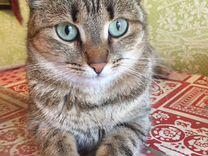 Кошка 2 года стерильна