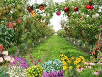 Саженцы Плодовые, ягодный и декоративные
