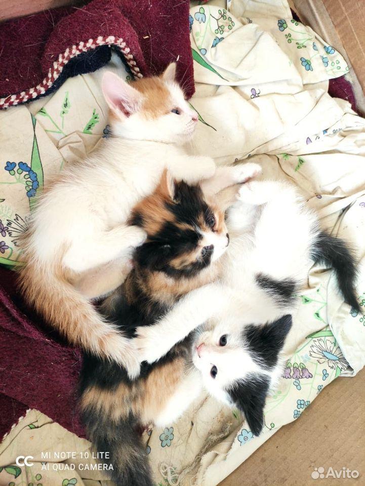 Котята в добрые руки  89011218595 купить 1