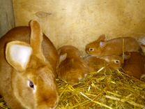 Кролики разных пород и возрастов