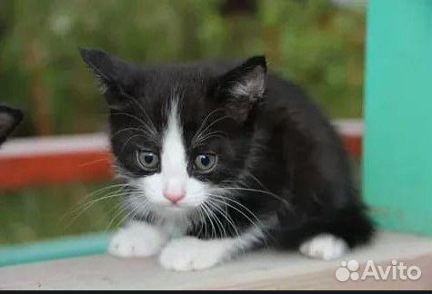 Котенок в хорошие и добрые руки  89163691460 купить 4