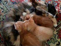 Кошка крысоловка,1,5 года