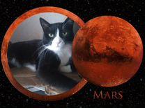 Добрый котик марсик ищет дом