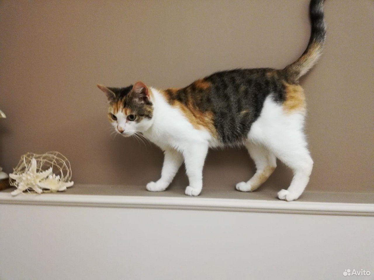Кошки  89115151100 купить 1
